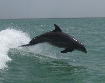 dolphin_holbox_ferry.jpg