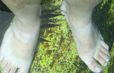Fish eating dry skin