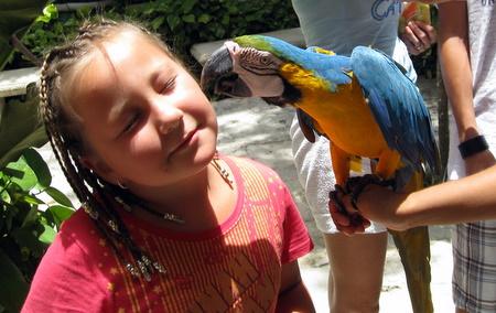 Parrot kissing Mika