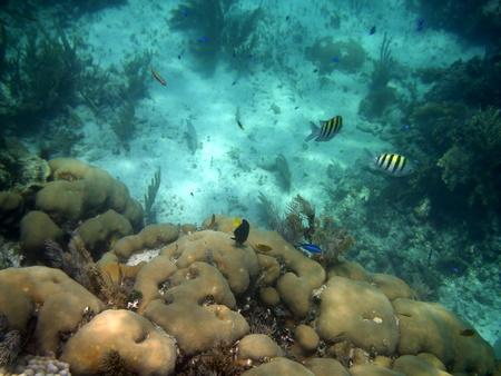 Reef at Puerto Morelos